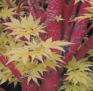 Plants with Attractive Bark
